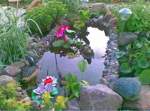 дизайн сада. садовый водоем